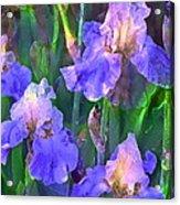 Iris 51 Acrylic Print