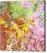 Iris Abstract I Acrylic Print