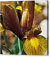 Iris After The Rain Acrylic Print