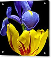 Iris And Tulip Acrylic Print