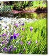 Iris And Water Acrylic Print