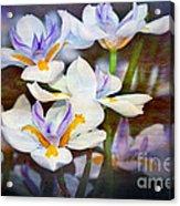 Iris Art Acrylic Print