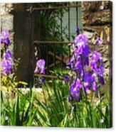 Iris At The Gate -1 Acrylic Print