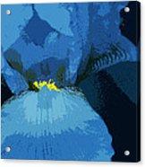 Iris Blue Acrylic Print