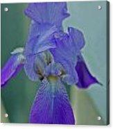 Iris I Acrylic Print