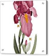 Iris II In Full Color Acrylic Print