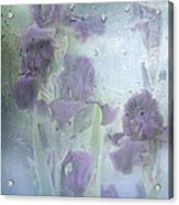 Iris In The Spring Rain Acrylic Print
