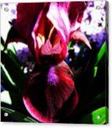 Iris Inner Beauty Acrylic Print