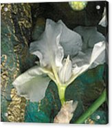 Iris Moon Acrylic Print by George  Page