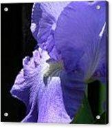 Iris of my Eye Acrylic Print