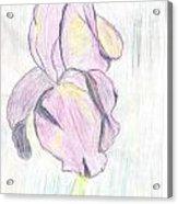 Iris Sketch Acrylic Print
