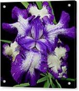 Iris Unfolded Acrylic Print