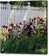 Iris With Fence  Acrylic Print