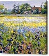 Irises And Two Fir Trees Acrylic Print