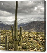 It Does Snow In The Desert Acrylic Print