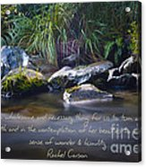 It Is A Wholesome....... Acrylic Print by Karen Lewis