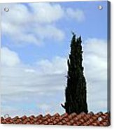 Italian Cyress And Red Tile Roof Rome Italy Acrylic Print