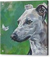 Italian Greyhound With Cabbage White Butterflies Acrylic Print