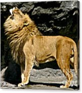 It's Good To Be The King Acrylic Print