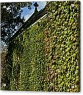 Ivy Covered Chapel Acrylic Print