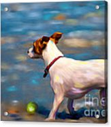 Jack At The Beach Acrylic Print by Michelle Wrighton