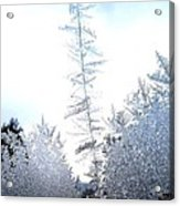 Jack Frost's Ice Forest Acrylic Print