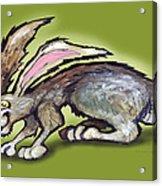 Jack Rabbit Acrylic Print