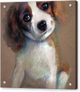 Jack Russell Terrier Dog Acrylic Print