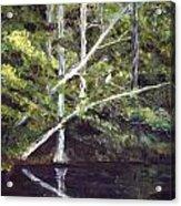 Jackson Bluff On The Waccamaw River Acrylic Print