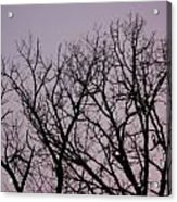 Jammer Fuzzy Trees 002 Acrylic Print