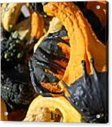 Jammer Gourds 001 Acrylic Print