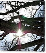 Jammer Lateralus Branching Trees Acrylic Print