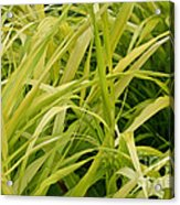 Japanese Forest Grass Acrylic Print