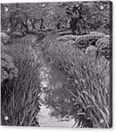 Japanese Garden With Irises Acrylic Print