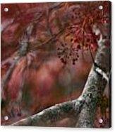 Japanese Maple Blur Acrylic Print