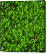 Japanese Moss Acrylic Print
