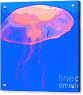 Jazzy Jelly Acrylic Print