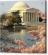 Jefferson Cherry Blossoms Acrylic Print