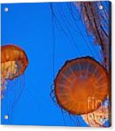 Jellies Acrylic Print