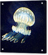 Jelly Fish Acrylic Print