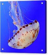 Jellyfish 4 Acrylic Print