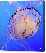 Jellyfish 5 Acrylic Print