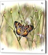 Jewel In The Marsh Acrylic Print
