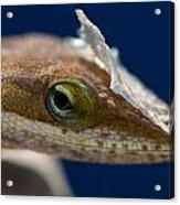 Jeweled Eye Acrylic Print