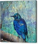 Josh's Blue Bird Acrylic Print