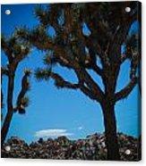 Joshua Tree 1 Acrylic Print