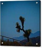 Joshua Tree 5 Acrylic Print