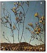 Joshua Tree Park In Bloom Acrylic Print
