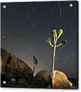 Joshua Tree Star Trails Acrylic Print by Dung Ma