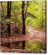 Josie's Brook Trail Acrylic Print